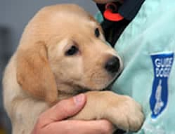 Helper Dogs Charities Uk