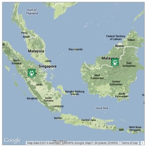 Locations where Orangutans can be found