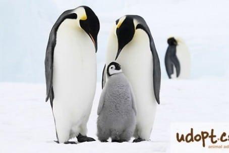 penguinFB