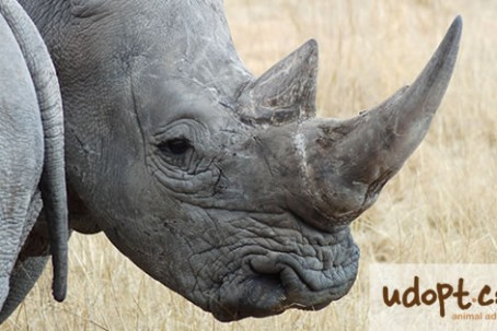 rhinoFB