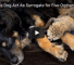 Dog Acts As Surrogate Parent For Five Orphaned Cheetah Cubs
