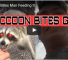 Watch This Video Of Man Getting Bitten By Racoon After Trying To Feed It