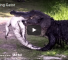 Terrifying Video Of Alligator Cannibalism