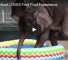 Check Out This Adorable Video Of A Baby Elephant Frolicking In A Pool