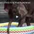 baby elephant pool