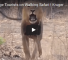 Check Out This Video Of A Lion Charging At A Group Of Tourists At Kruger National Park