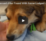 Animal Service Department Rescues Puppy With Arrow Lodged In Neck
