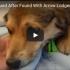 injured puppy
