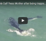 Check Out This Video Of A Whale Calf Saving Its Stranded Mother