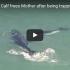 whale calf saves mum