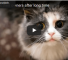 Watch These Cats Greet Their Owners After A Long Absence