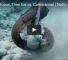 Moray Eel Attack Captured On Video