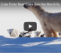 Check Out This Video Of Adorable Polar bear Cubs Getting Their First Glimpse Of The Sun
