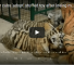 Orphaned Tiger Cubs Fed Using Toy