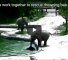 Watch This Video Of Two Adult Elephants Rescuing A Drowning Calf