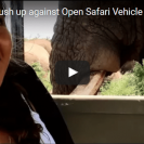 Check Out This Safari Group's Encounter With A Wild Bull Elephant