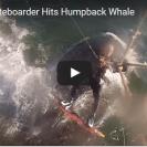kiteboarder hits humpback whale