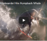Watch This Kiteboarder Get Hit By A Humpback Whale And Come Away Completely Unscathed