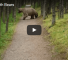 Check Out This Close Encounter With Mama Bear And Her Cubs