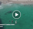 Check Out This Video Of A Grey Whale Swimming Right Next To A Group Of Unsuspecting People