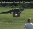 Monster Alligator Roams Around A Florida Golf Course