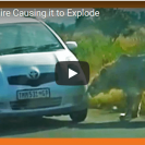 Watch This Lion Bite A Tourist Car Causing Its Tire To Explode