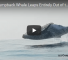 Watch This 40 Ton Humpback Whale Leaping Out Of The Ocean