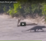 Check Out This Fight Between A Mongoose And A Cobra