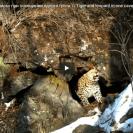 tiger flees