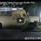 elephant crossing border
