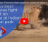 Watch This Intense Battle Between Tiger And Mama Bear Protecting Her Cub
