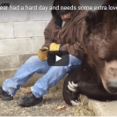 Watch This Guy Provide Comfort To His Best Mate Bear