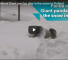 Check Out These Two Giant Pandas Get Their First Taste Of Finnish Snow