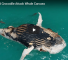 Watch This Fascinating Video Of Sharks and A Crocodile Feeding On The Same Meal