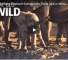 Check Out This Video Of Baby Elephant Feeling A Little Awkward