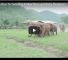 Watch This Group Of Elephants Greet Their Baby After Returning From An Absence