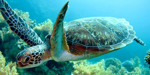 The Disturbing Disappearance Of Turtles