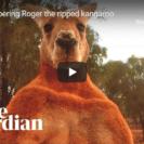 Roger The Boxing Kangaroo Passes Away