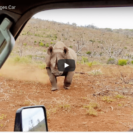 Check Out FootageOfBlack Rhino Charge